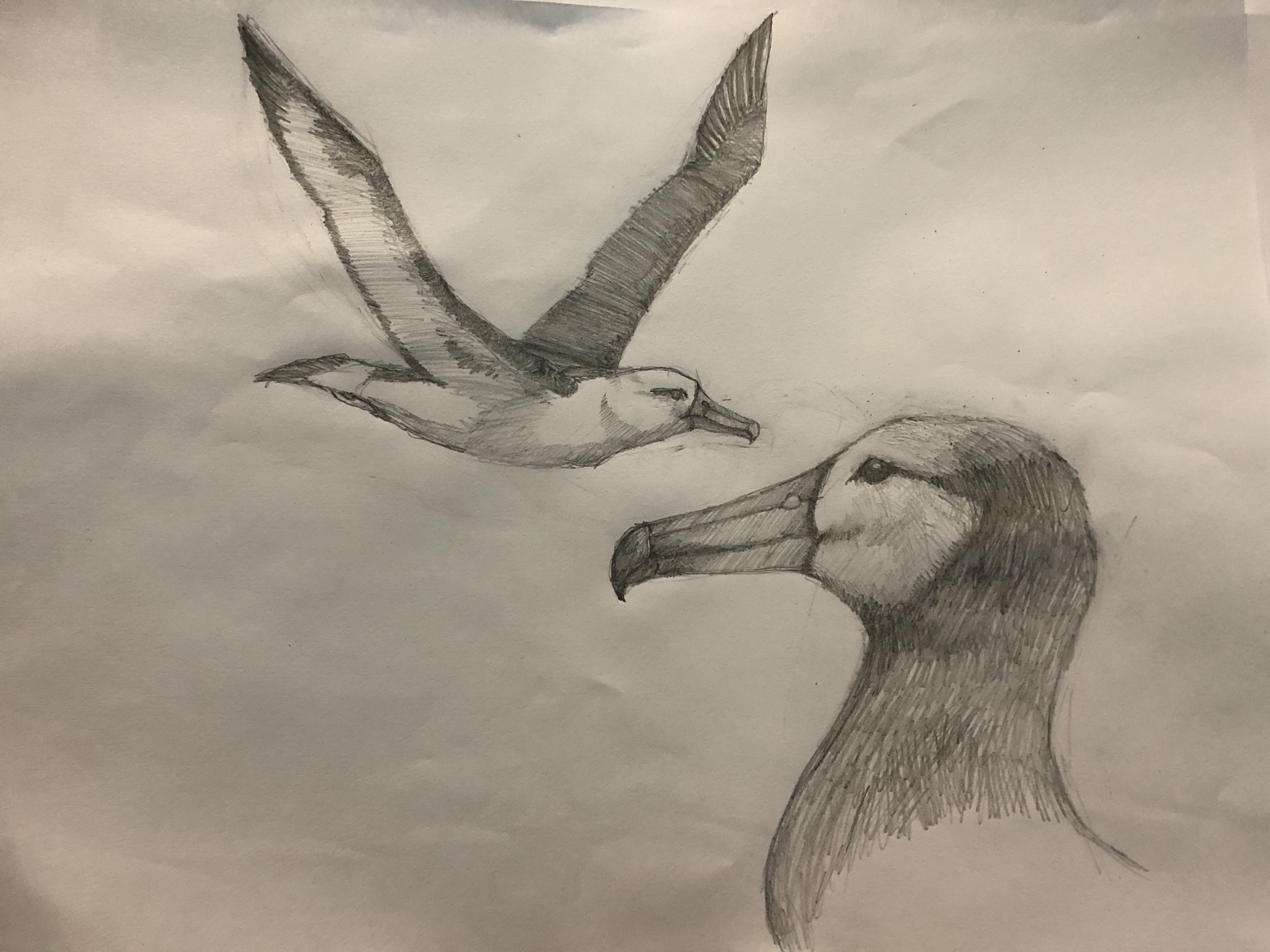 Nathan's sketch