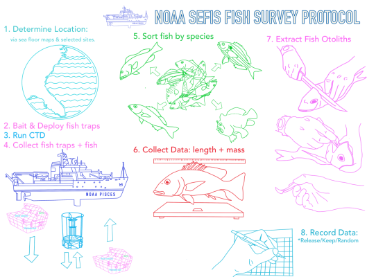 NOAA Fish Protocol (color)