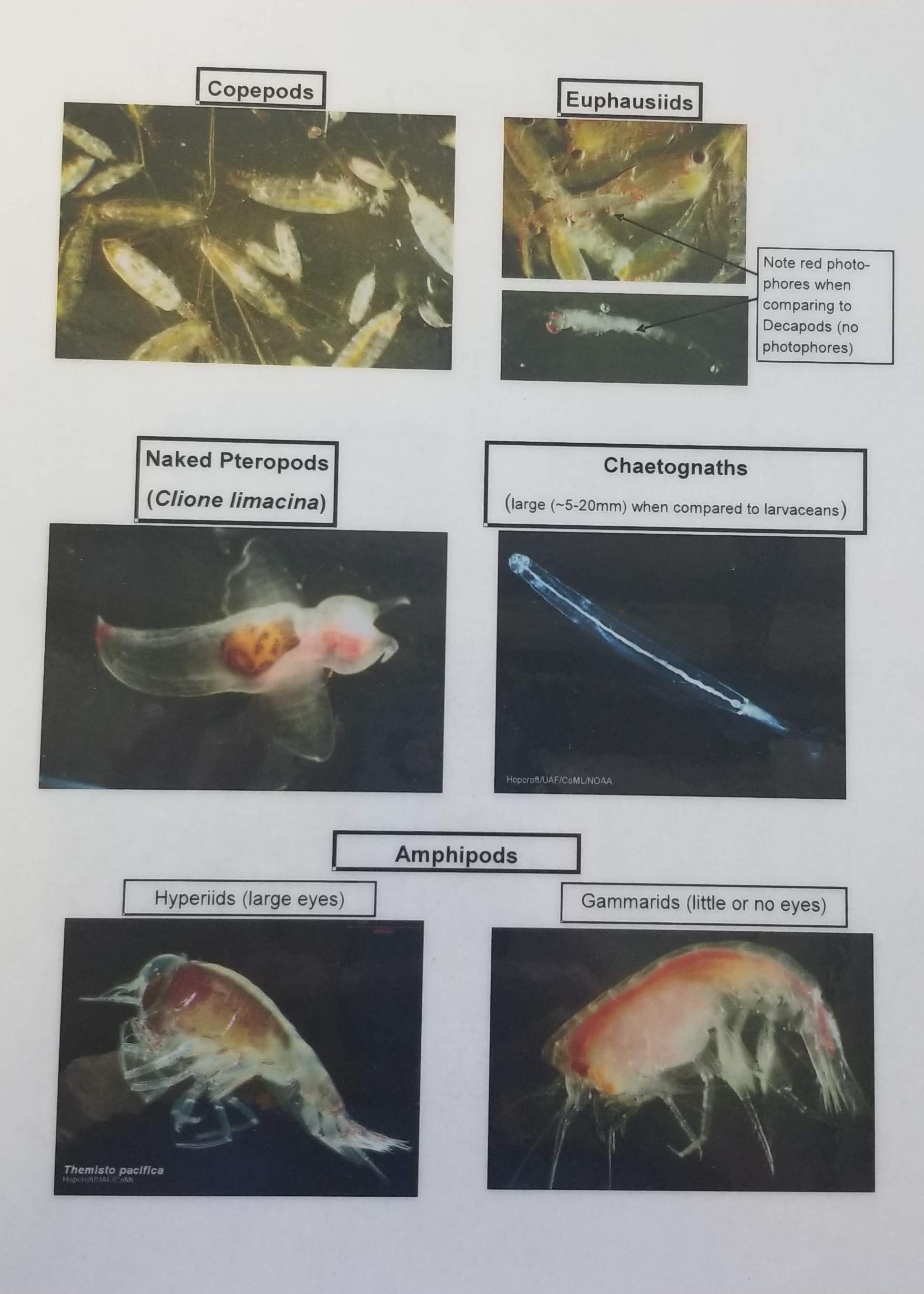 Plankton ID