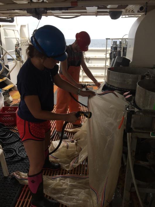 Jessica rinses bongo nets