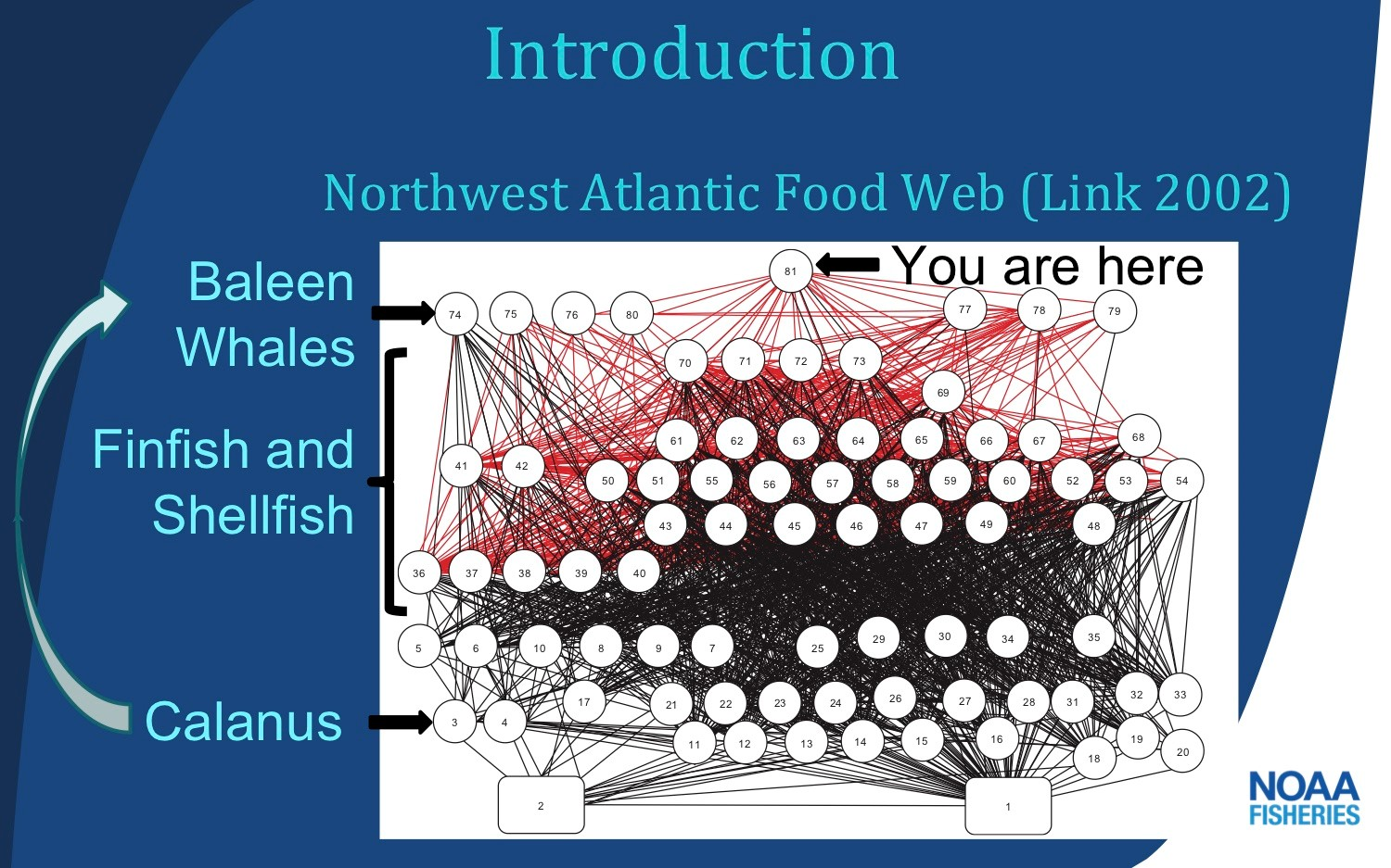 food web slide